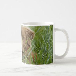 Nova Scotia Duck Tolling Retriever Classic White Coffee Mug