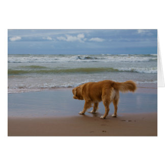 Nova Scotia Duck Tolling Retriever Ocean Cautious Card