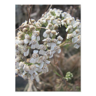 November s Flowers Photographic Print