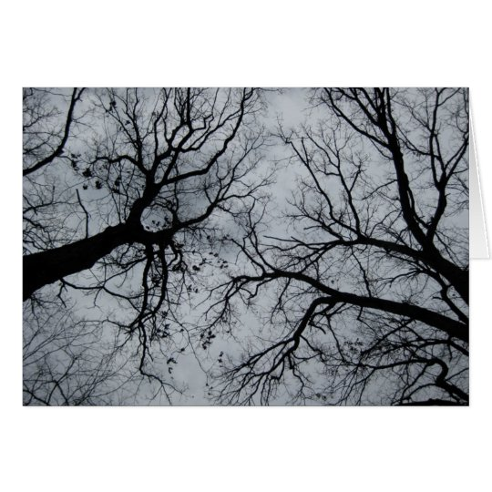 November Sky Through Trees Photograph Card