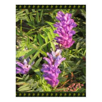 NOVINO Wild n Garden variety Flower Collection Postcard