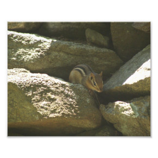 Now you see me. . .  Chipmunk photographic print