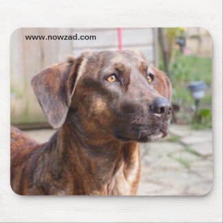 Nowzad Rescue Dog Brin Mousepad