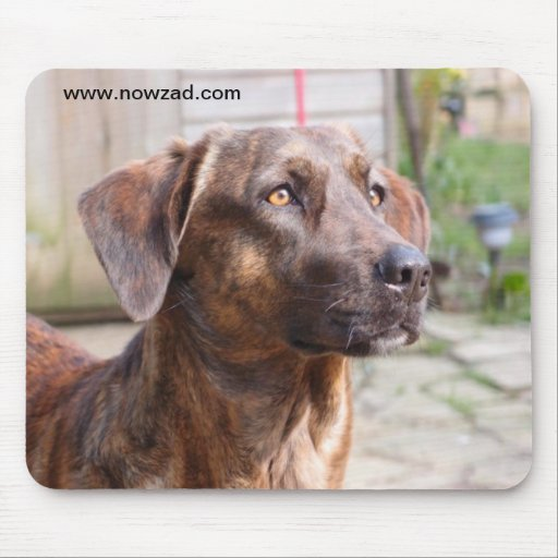 Nowzad Rescue Dog Brin Mousepad
