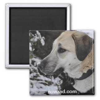 Nowzad Rescue Dog Kilo Magnet