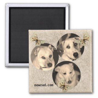 Nowzad Rescue Dogs Magnet