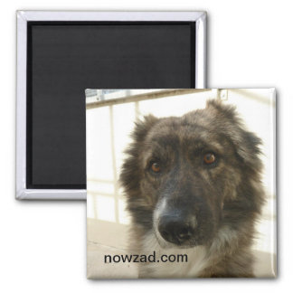 Nowzad Rescue Wylie Magnet