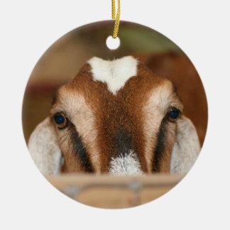 Nubian doe peeking over wooden rail christmas ornament