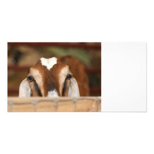 Nubian doe peeking over wooden rail photo greeting card