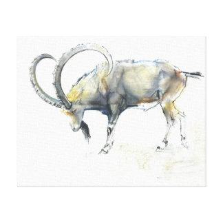 Nubian Ibex 2008 Stretched Canvas Prints