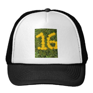 number sixteen drawn with dandelion on the lawn cap