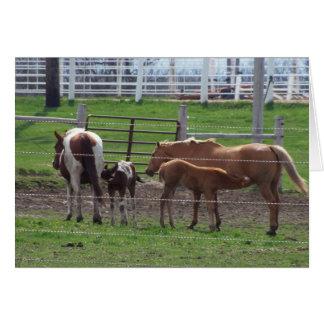 Nursing Foals Card