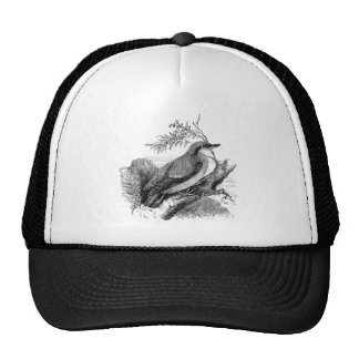 nuthatch bird vintage illustration hats