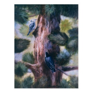Nuthatch Love At First Sight Postcards
