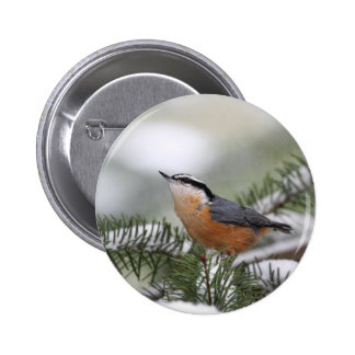 Nuthatch on Snowy Branch in Winter 6 Cm Round Badge