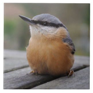 Nuthatch photo large square tile