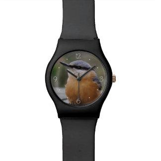 Nuthatch photo watch