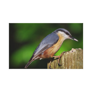 Nuthatch Wrapped Canvas