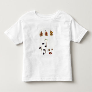 Nutmeg, plate 8, from 'Collection Precieuse et Enl T-shirts