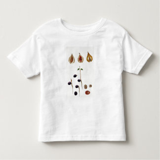 Nutmeg, plate 8, from 'Collection Precieuse et Enl Shirt