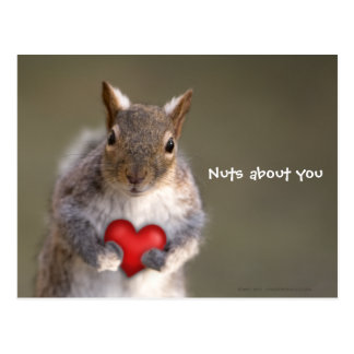 Nuts about you: Squirrel Valentine's Day Postcard