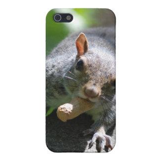 Nutty Squirrel iPhone 4 Case