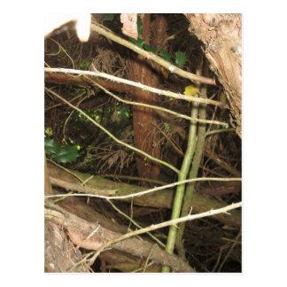 NVN719 American CherryHILL NJ Wild Green Wood FUN Post Card