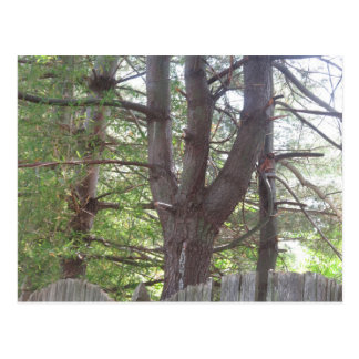 NVN719 American CherryHILL NJ Wild Green Wood FUN Postcard
