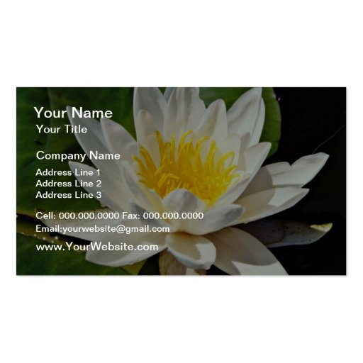 Nymphaea albida, white, hardy water lily  flowers business card template