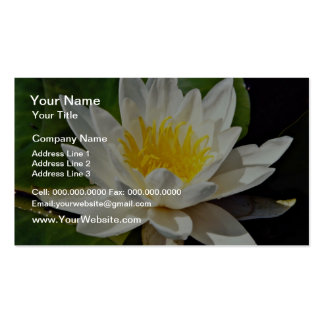 Nymphaea albida, white, hardy water lily  flowers pack of standard business cards