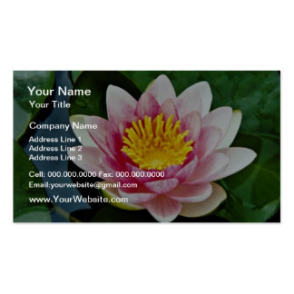 Nymphaea attraction, red, hardy water lily  flower pack of standard business cards