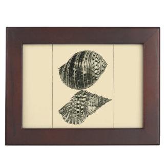 NZ Shells - Dolium variegatum, Lotorium rubicundum Memory Boxes