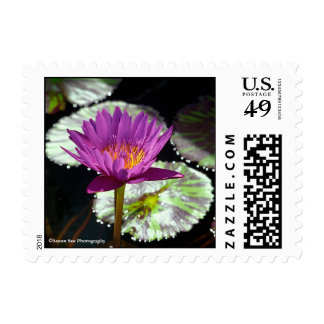 Oahu Water Lily #1 - Posage, small Postage Stamp