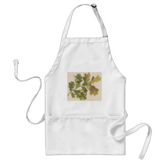 Oak 1907 standard apron