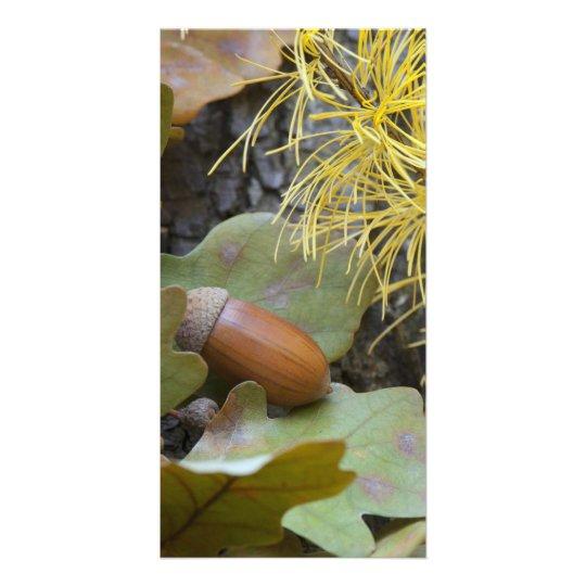 Oak acorn photo card