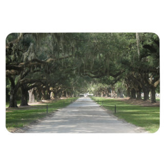 Oak Alley at Boone Hall, Charleston SC Magnet