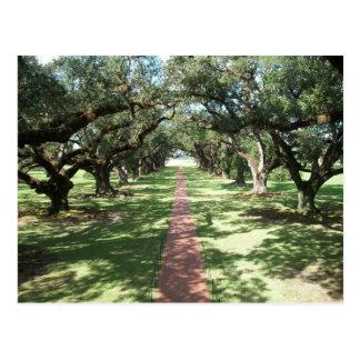 Oak Alley Plantation pathway Postcard