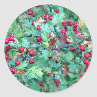Oak and berries classic round sticker