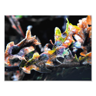 Oak Fairy Frosting Photographic Print