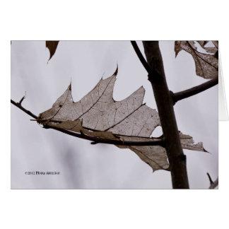 Oak Ghost Leaf Greeting Card