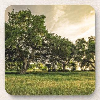 Oak Grove Sunset Coaster