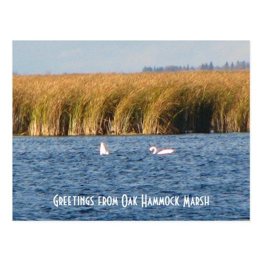 Oak Hammock Marsh Postcard