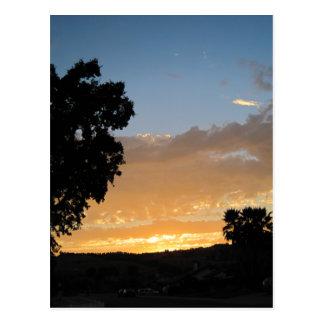 Oak in the Sunset Postcard