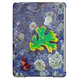 Oak Leaf and Acorns on a Lichen covered rock