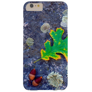 Oak Leaf and Acorns on a Lichen covered rock Barely There iPhone 6 Plus Case