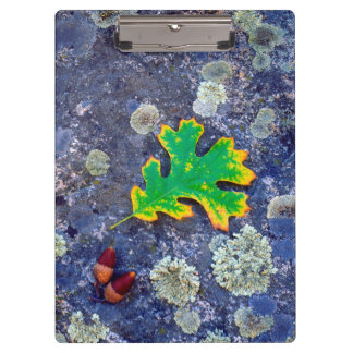 Oak Leaf and Acorns on a Lichen covered rock Clipboard