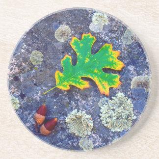 Oak Leaf and Acorns on a Lichen covered rock Coaster