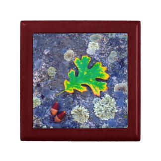 Oak Leaf and Acorns on a Lichen covered rock Gift Box
