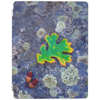 Oak Leaf and Acorns on a Lichen covered rock iPad Cover