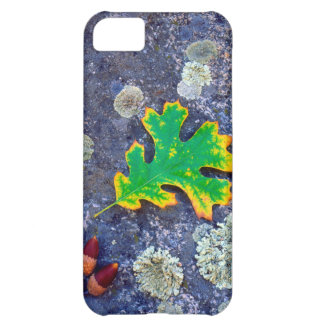 Oak Leaf and Acorns on a Lichen covered rock iPhone 5C Case